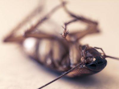 cockroach-4832821_640