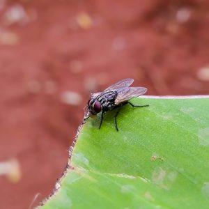 housefly-2266095_640