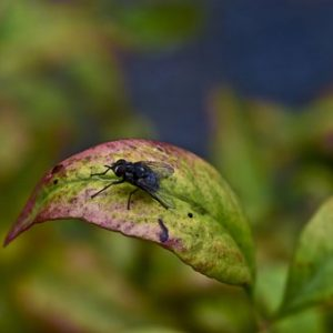 insects-5872630__340