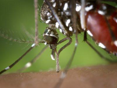 mosquito-1301764_640