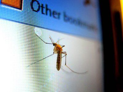 mosquito-434904_640