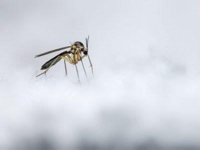 mosquito-4808771_640