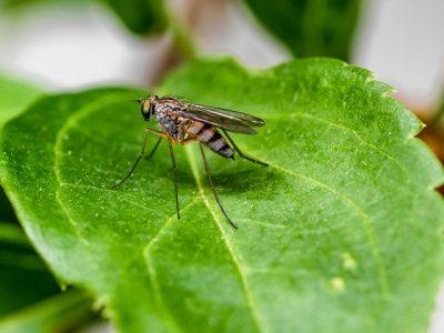 mosquito-5317880_640