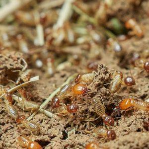 termites-3367347_640